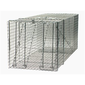 Large raccoons trap