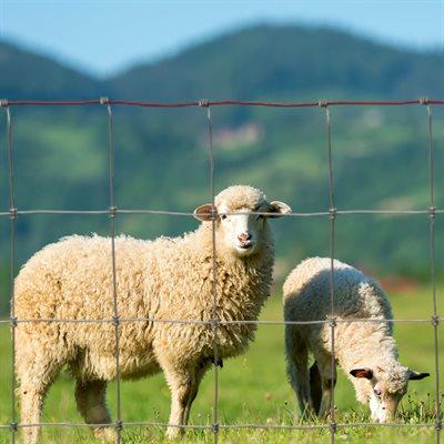 """Clôture 48"""" X 100 pieds pour chèvres et moutons (fil galvanisé classe 3)"""
