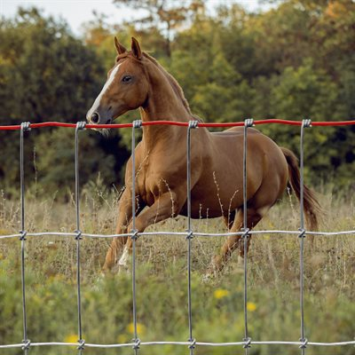 """Clôture 60"""" pour chevaux"""